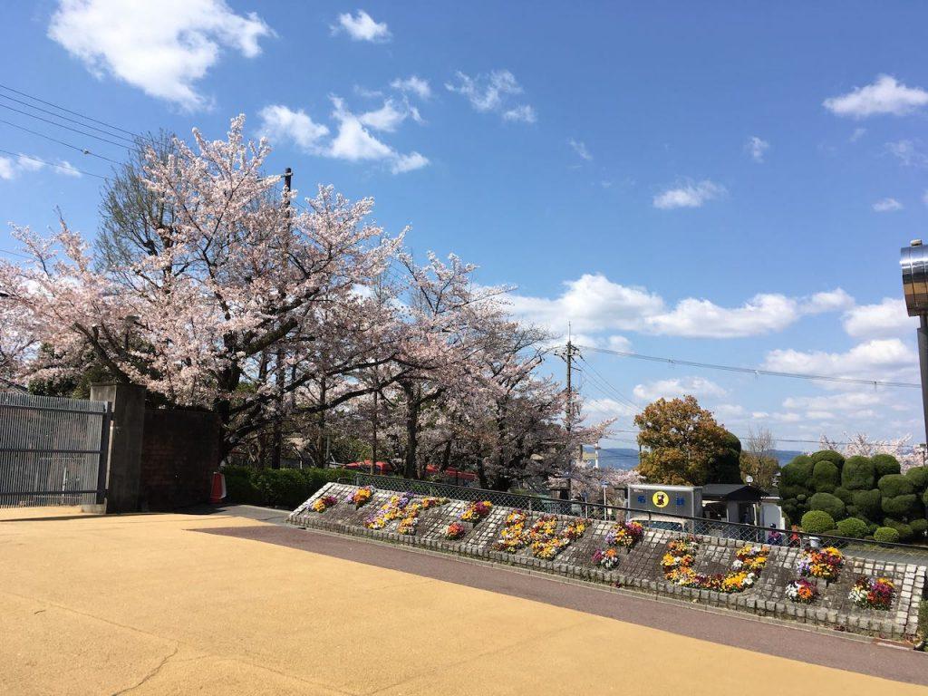 A門の桜と花壇